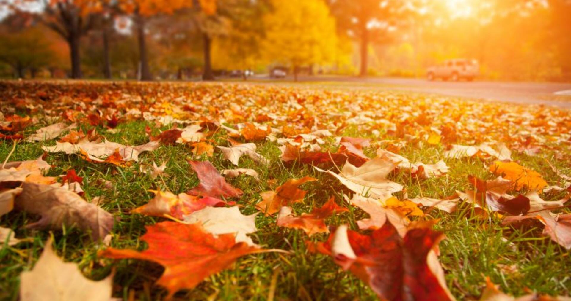 Six things to do around your home this Autumn to prepare for the cooler months